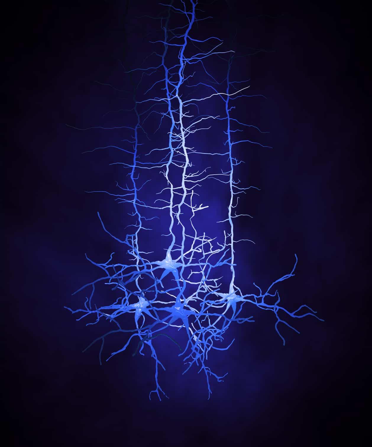 Das Bild zeigt einen Verbund von Neuronen. academay of neuroscience