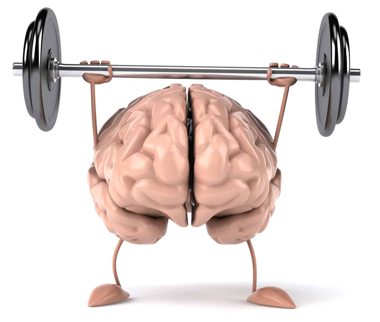 Das Bild zeigt ein Gehirn, das mit Hanteln trainiert. academy-of-neuroscience